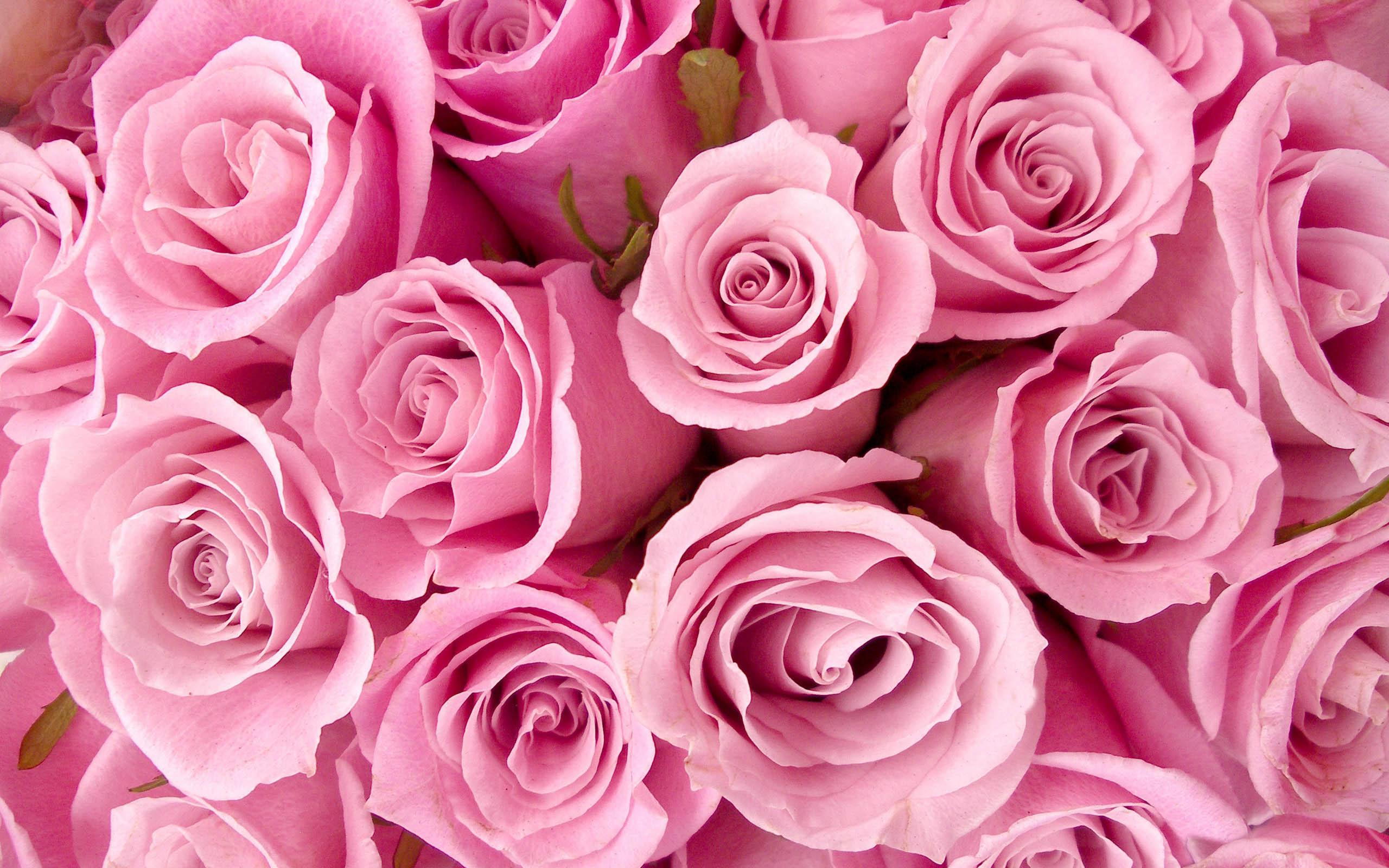 Se Sono Rose Fioriranno La Cinzia